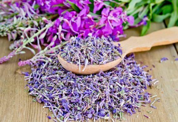 Цветы иван чая полезные