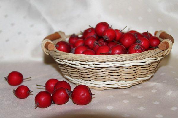 Отвар шиповника и боярышника -польза, рецепты, противопоказания