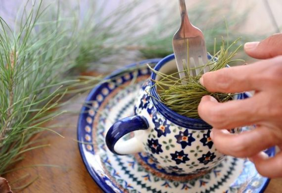 чай из сосновых иголок польза или вред