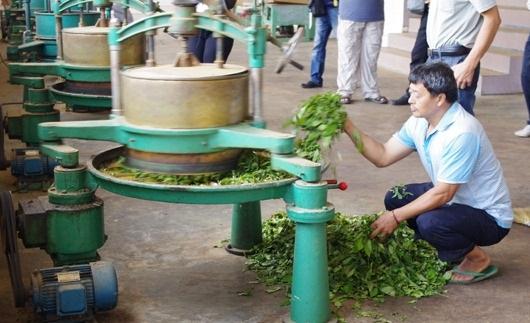 производство чай молочный улун