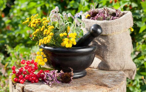 Травы для очищения кишечника