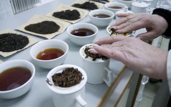 дегустатция чая