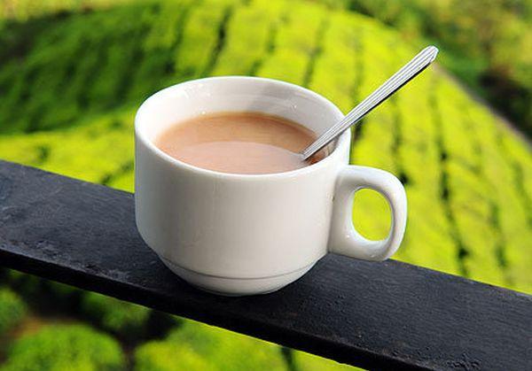 Почему чай нельзя пить с молоком