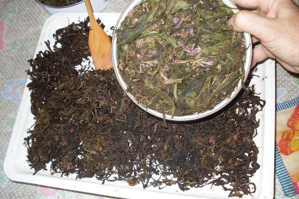 ферментируем иван чай