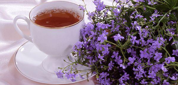 Свойства чабреца в чае