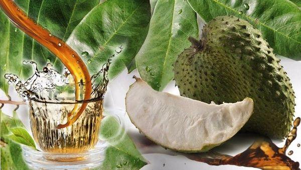 Чай саусеп: польза и вред, заваривание