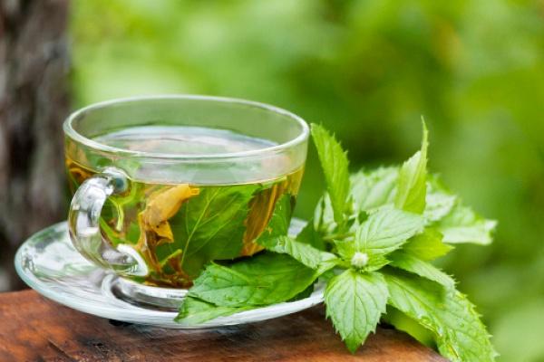 Какая мята лучше для чая