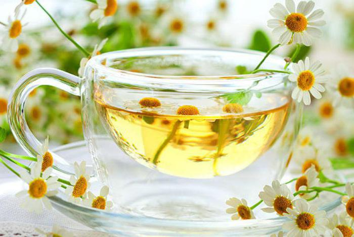 Ромашковый чай при беременности: можно ли его пить беременным