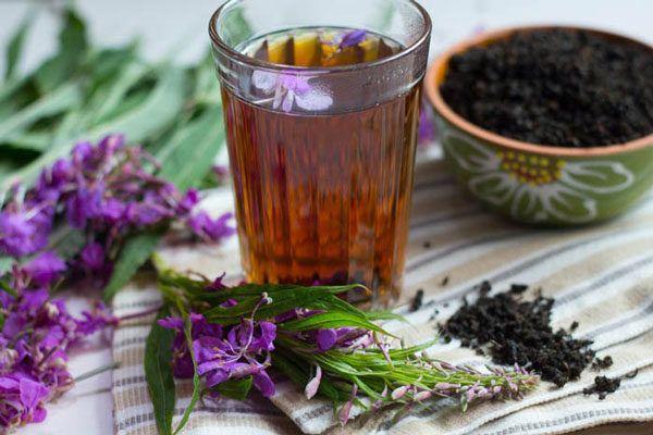Иван-чай (копорский чай) - полезные и лечебные свойства и применение иван-чая, заготовка, ферментация и противопоказания