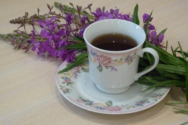 Кипрейный чай польза и вред