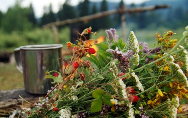Монастырский чай от курения: реально помогает или нет
