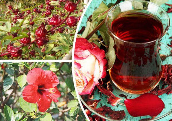 Польза и вред каркаде, состав и свойства суданской розы