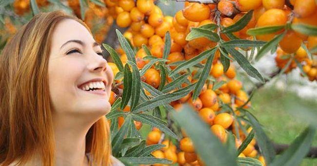Чем полезна облепиха, полезные свойства ягоды, рецепты