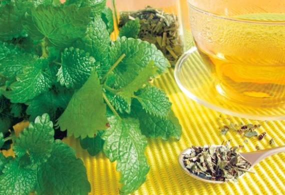 Чай с мелиссой, состав, полезные свойства