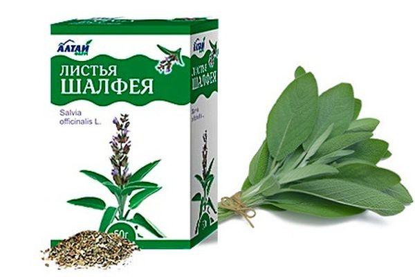 Листья шалфея: магическая сила растения. Рецепты красоты