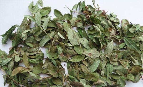 Брусничный лист, применение в народной медицине