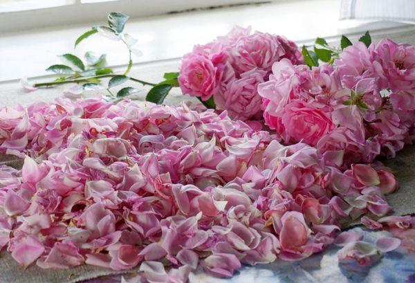 Чай с розой: полезные свойства королевы цветов. Возможный вред