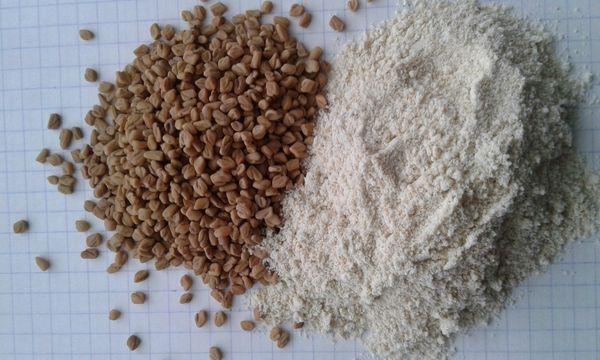 Пажитник: полезные свойства и противопоказания растения