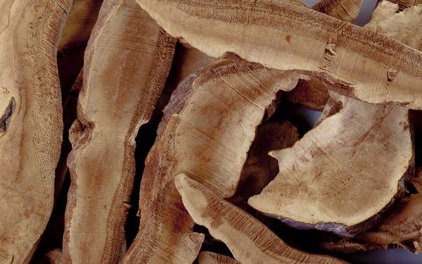 Чай из гриба линчжи: полезные свойства, применение