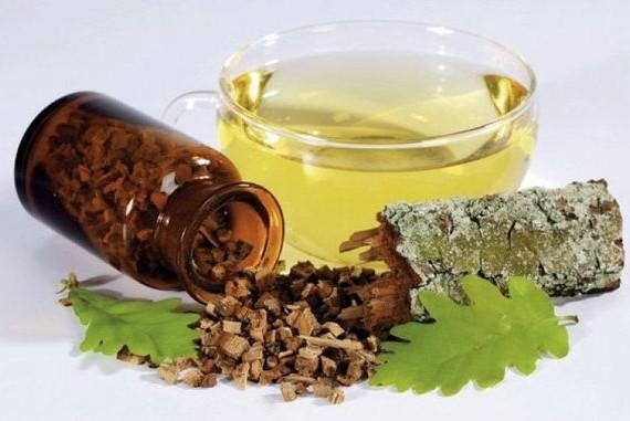 Отвар коры дуба: лечебные свойства, рецепты народной медицины