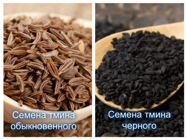 Чай из тмина обыкновенного и черного тмина, полезные свойства