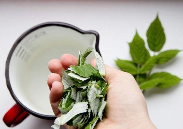Чай из листьев малины, полезные свойства и противопоказания