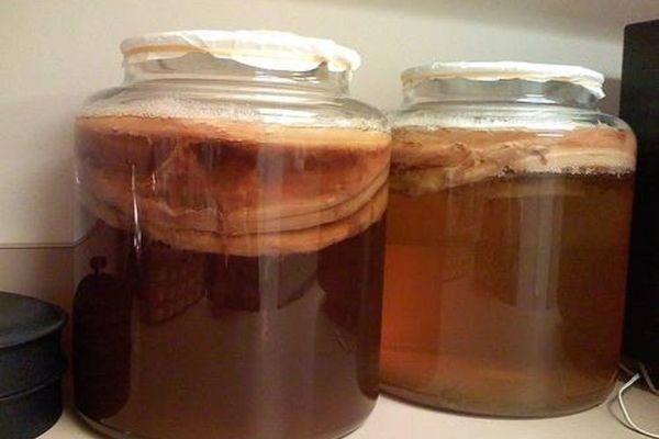 Чай Комбуча — отличная альтернатива лимонаду, польза, вред