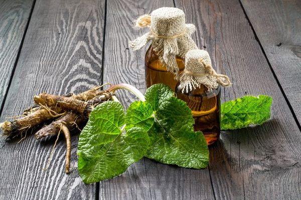 Чай из лопуха — кровь очищает и печень защищает. Польза и вред