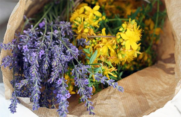 Урологический чай: рецепты приготовления, травяные сборы