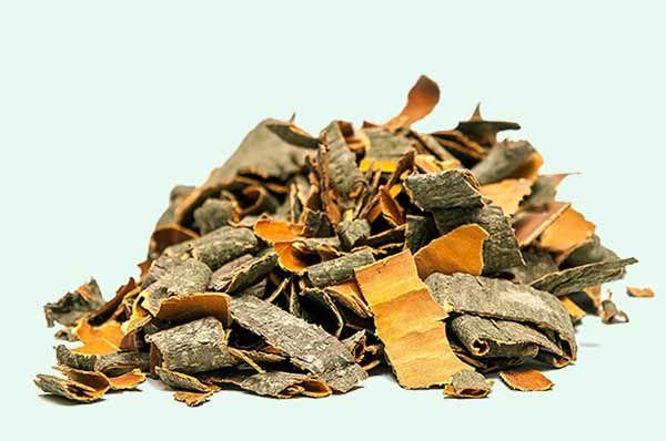 Отвар коры осины, польза и вред, применение в медицине