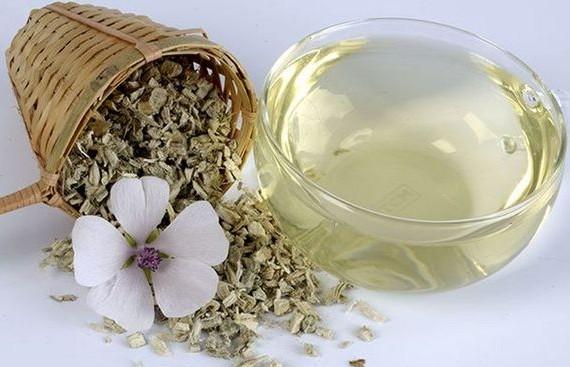 Отвар корня алтея — от кашля исцеляет, здоровье поправляет