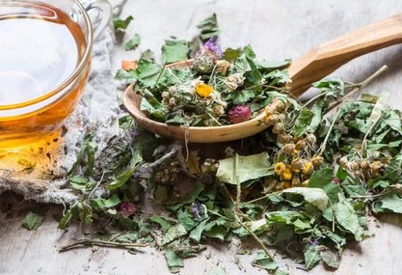 Мочегонные травы — помощь природных диуретиков при отеках
