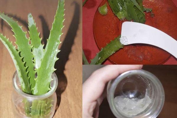 Как пить алоэ и от чего помогает «домашний лекарь». Польза и вред