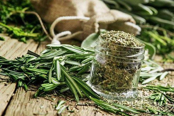 Чай с тархуном – полезные свойства драконовой полыни