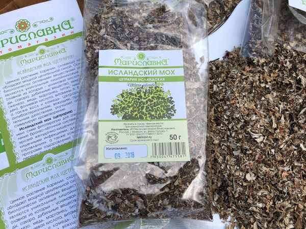 Исландский мох – польза и вред природного антибиотика, применение