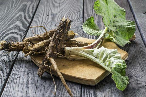 Настойка из лопуха – применение и полезные свойства средства