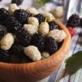 Шелковица: полезные свойства и противопоказания растения
