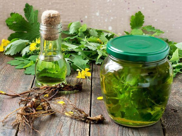 Настойка чистотела – лекарство или яд? Применение настойки