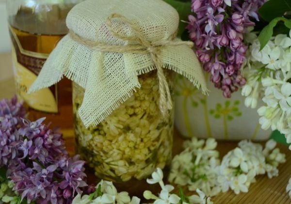 Настойка сирени – полезные свойства душистой красавицы, рецепт
