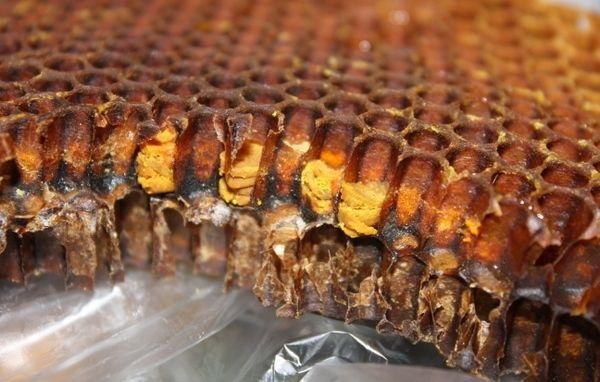 Перга пчелиная – чудесная сила цветочной пыльцы, применение перги