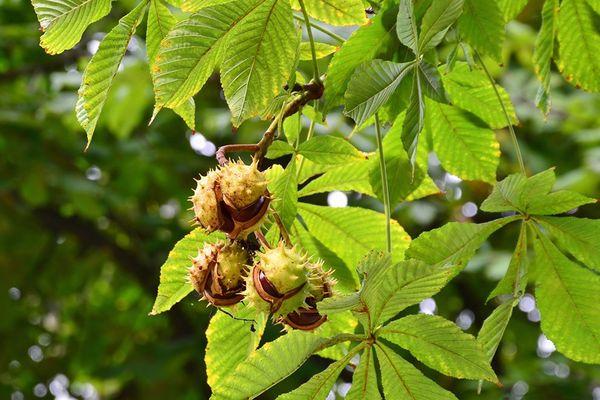 Травы, разжижающие кровь – польза природных антикоагулянтов