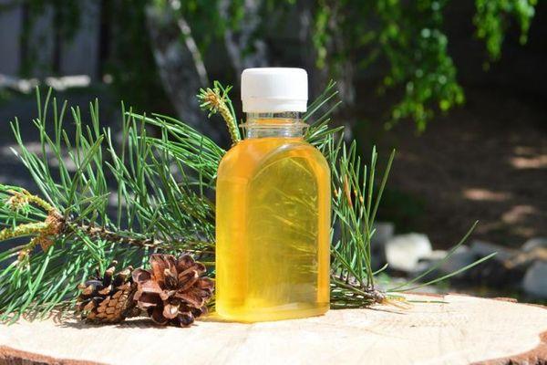 Живица кедровая – полезные свойства хвойной смолы, применение