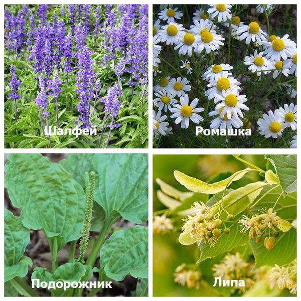 Травы во время беременности – польза и вред фитотерапии