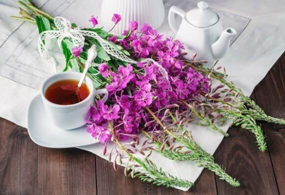 Иван чай: лечебные свойства, применение в лечении заболеваний